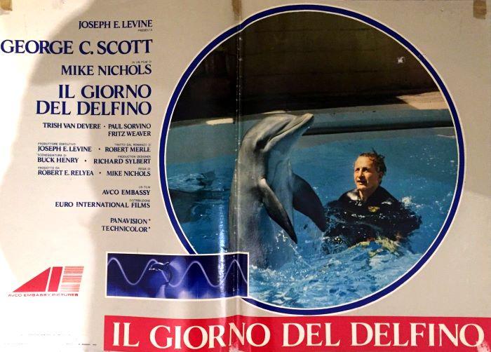 Risultati immagini per il giorno del delfino